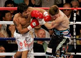 boxer dog in boxing gloves hecho en mexico the story of cleto reyes boxing gloves i spyer