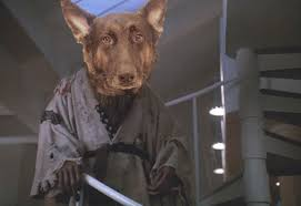 master splinter halloween costume my brother u0027s dog reminds me of master splinter imgur