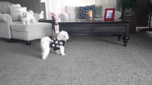 black living room carpet design black carpets for living room