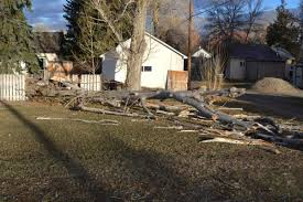 high winds topple trees damage fences roofs news