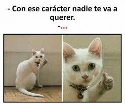 Gato Meme - dopl3r com memes con ese caracter nadie te va a querer con