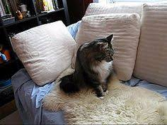 Sheepskin Rug Cleaning How To Clean A Sheepskin Rug For Our Home Pinterest Cleaning