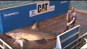 where is the great white shark betsy youtube