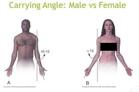 Anatomy Difference Between Male And Female Why Are Women U0027s Forearm More Twisted As Compared To Men Quora