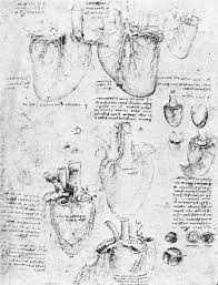 the drawings of heart by leonardo da vinci sketches showing the