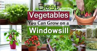 Window Sill Garden Inspiration Inspiring Windowsill Gardening New At Diy Ideas Model Kitchen