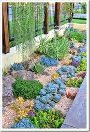 another combination of succulents for the parking strip
