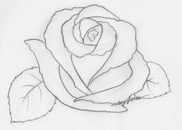 simple pencil drawing of rose drawing of sketch