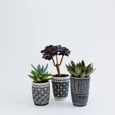 photo brittle bones planters plants and cups