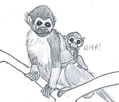 squirrel monkey u2013 art of my mind