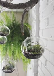 diy hanging succulent terrarium u2014 needles leaves