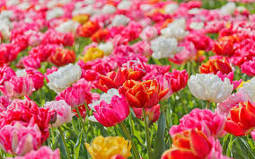 5 flower facts we bet you didn u0027t know about flaberry com