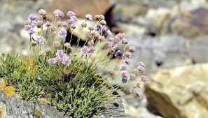 Best Plants For Rock Gardens Rock Garden Plants Rock Rock Garden Rock Garden Plants For Shade