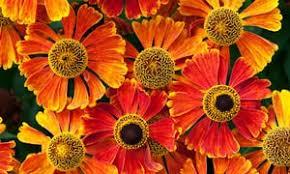 Summer Gardening - late summer gardening jewel like plants that shine for months