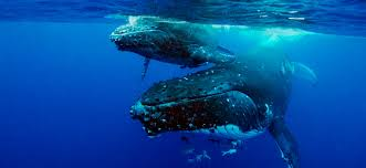 save our marine life