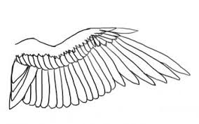 Bird Wing - how to draw a bird wing by birds animals free