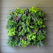 indoor green wall with simple modern ideas a little of plant