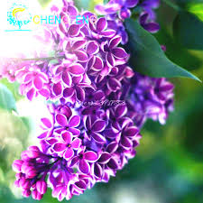 ornamental flowering trees promotion shop for promotional