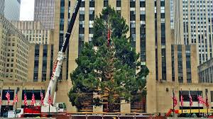 rockefeller center tree goes up in new york city nbc new york