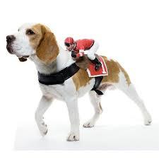 Small Dog Halloween Costumes Ideas Small Dog Halloween Costumes Dress Pooch Infobarrel