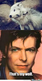 Bowie Meme - david bowie finds his pet by hellonfire666 meme center