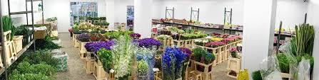 Flower Wholesale Wholesale Flowers In Scotland James Taylor Flowers