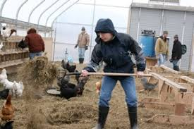 thanksgiving farm at the center for discovery biodynamic association