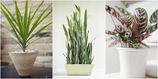 house plants low light house plants low light low light houseplants plants that don t