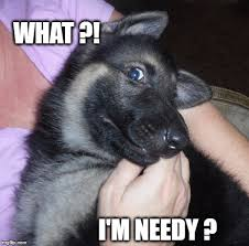 Cute Puppy Meme - image tagged in cute puppy funny puppy german shepherd needy imgflip