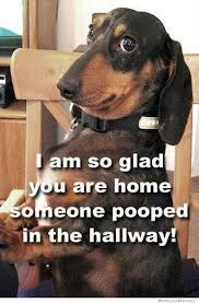 Dog Poop Meme - 25 funny dog memes dog memes memes and dog