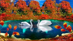 lakes fall landscape beautiful autumn lake colors swans pretty
