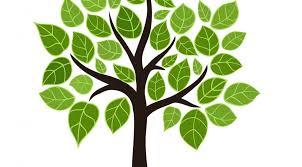 summer tree care kma tree service and maintenance tips kma tree
