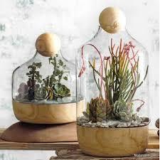 glass terrariums u2013 modish store