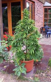 how much light do pot plants need plants