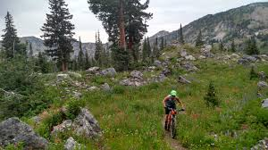 alta utah summer mountain biking in alta discover alta