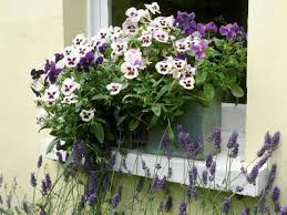 how to create a beautiful container garden with pansies hgtv