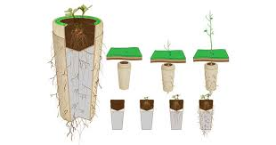 biodegradable urn biodegradable urns will turn you into a tree after you die
