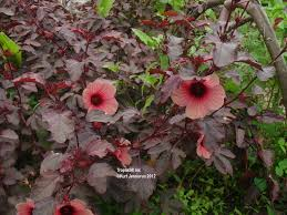Tropical Plants Pictures - tropical garden plant seeds from south america