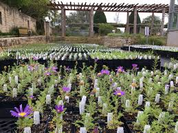 texas native plants database native plants lady bird johnson wildflower center