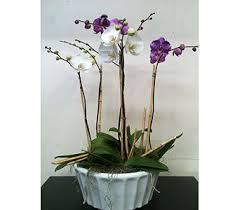 florist naples fl s day flowers delivery naples fl driftwood garden