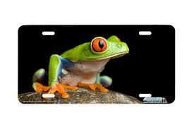 airstrike 247 eye tree frog on rock green