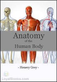 Human Figure Anatomy Anatomy Of The Human Body By Henry Gray Free At Loyal Books