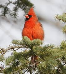 New Hampshire birds images Participate in the annual nh audubon christmas bird count and 89898