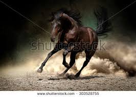 Black Mustang Horse Wild Horses Running Stock Images Royalty Free Images U0026 Vectors