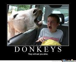 Aisha Meme - donkey by aisha meme center