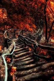 best 25 autumn forest ideas on pinterest fall trees fall