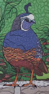 backyard wildlife portraits ipad style u2026california quail 2