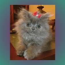 Cat Meme Maker - cute cat meme generator