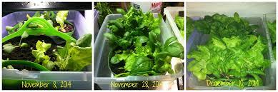 Indoor Gardening by Indoor Gardening And Vacations Small Scale Gardening