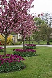 Landscaping Ideas Around Trees Landscaping Around Trees Ideas You Should Not Miss